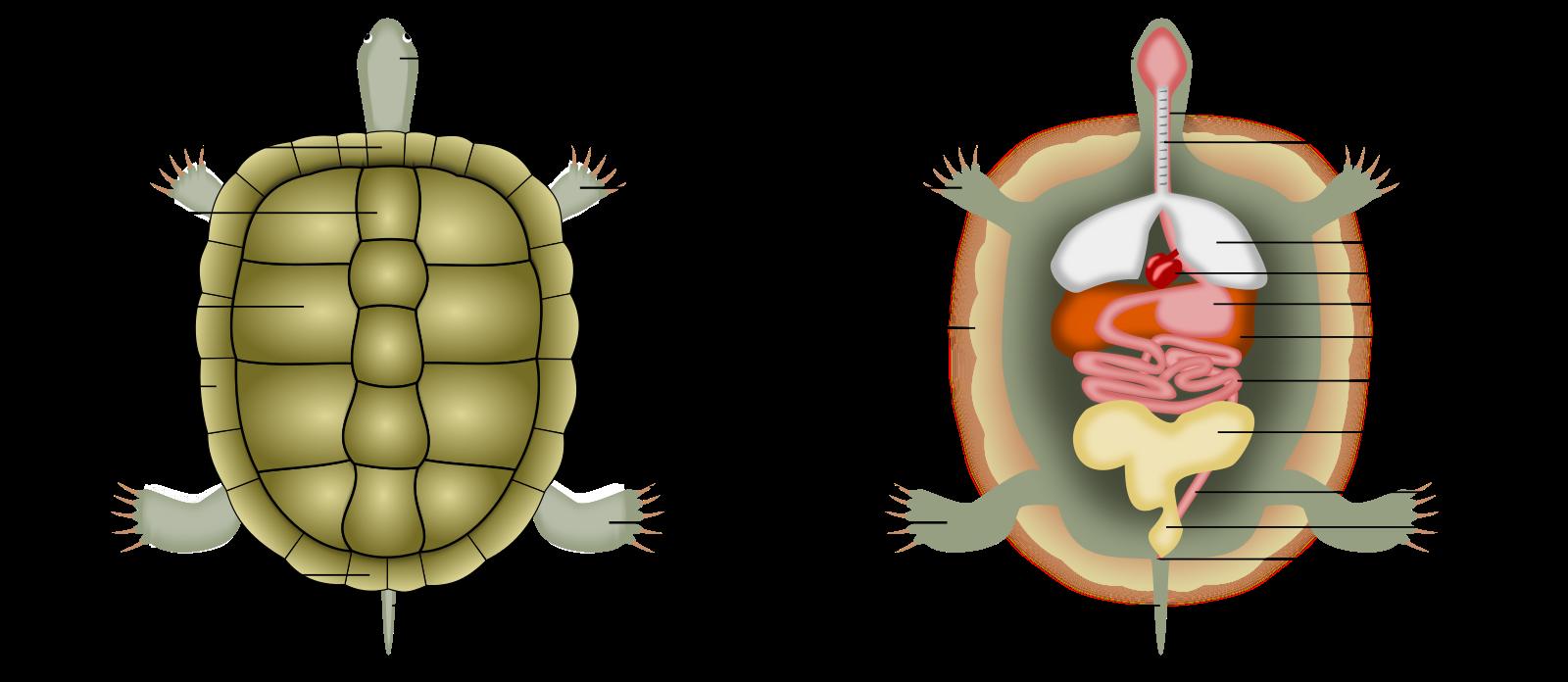 Пищеварительная система членистоногих и органы выделения