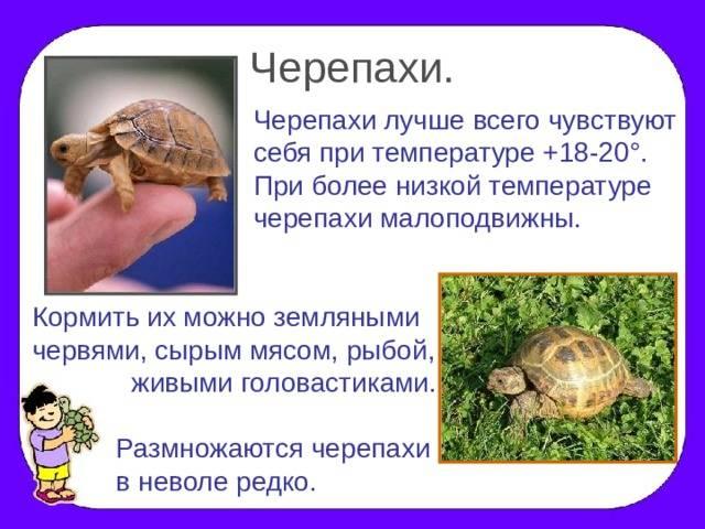 Половая система у черепах