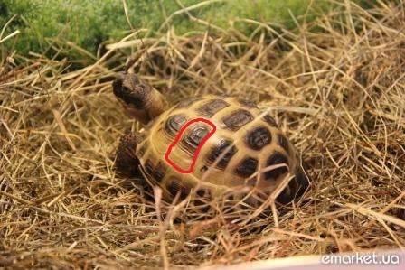 Как продлить жизнь черепахе в домашних условиях?