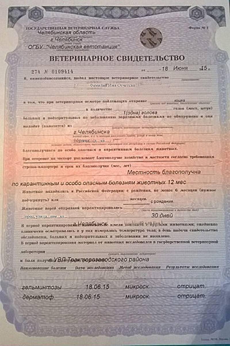 Kak-vodit-samolet - запись пользователя тася (мамусик-одиночечка) (tanushka19) в сообществе активный отдых в категории нужен совет путешественников! - babyblog.ru