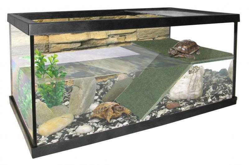 Как обустроить аквариум для водной черепахи?