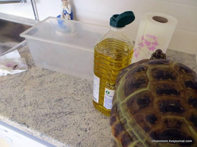 Как мыть сухопутных черепах