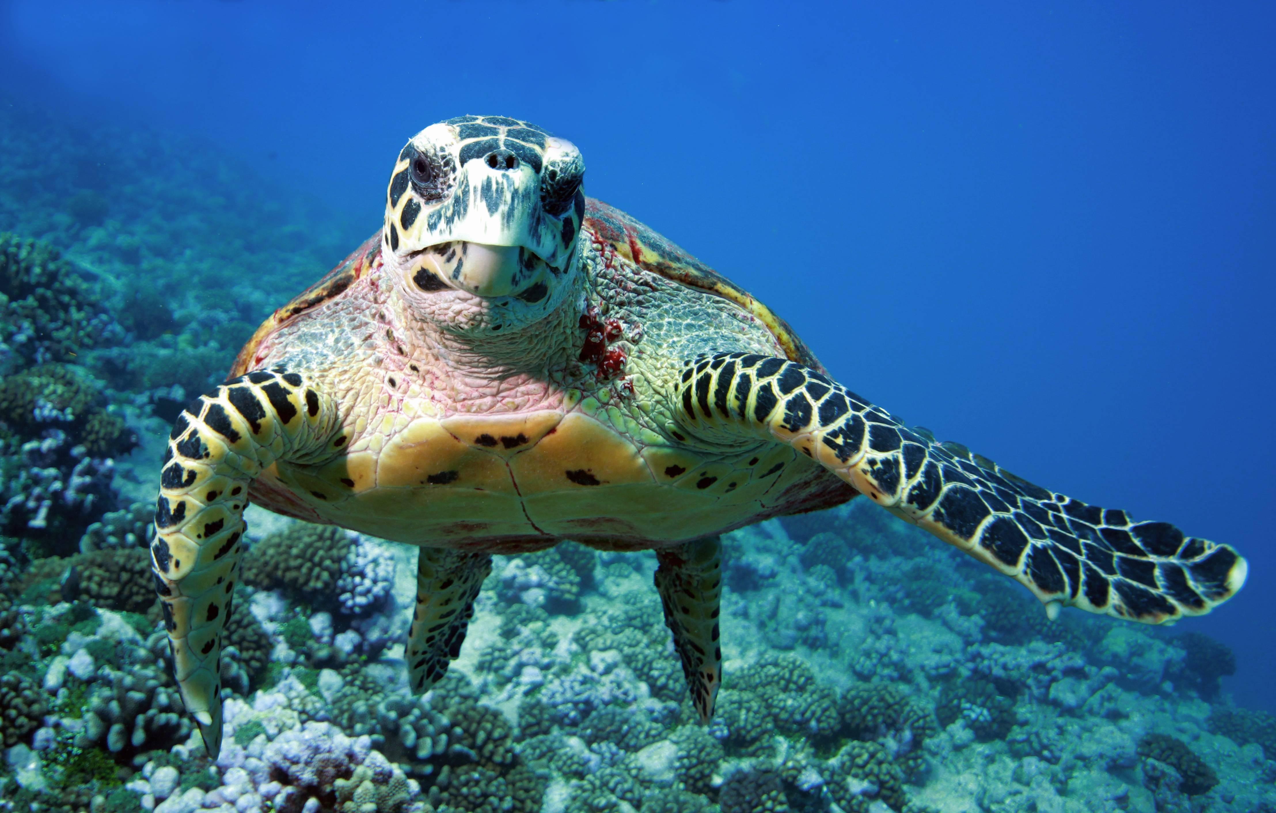 Фонтан черепах в риме