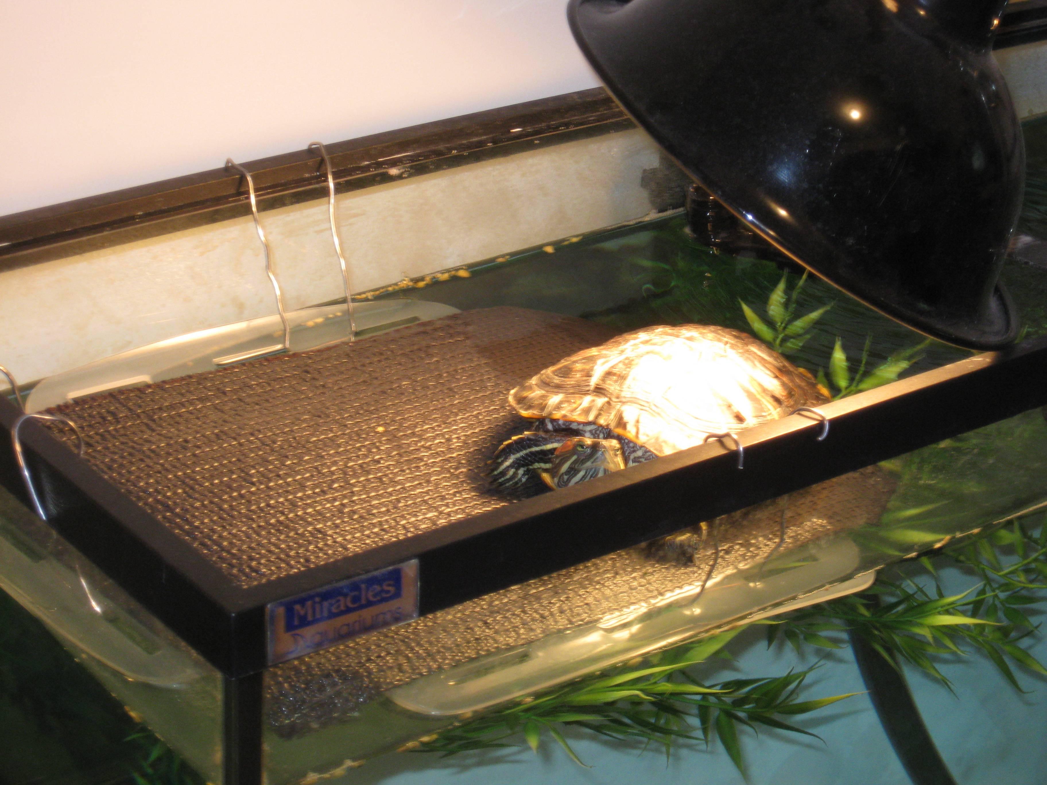 переноска для черепахи красноухой