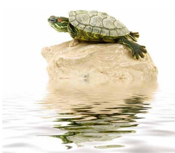 Умные ли черепахи. мифы, ошибки и заблуждения о черепахах