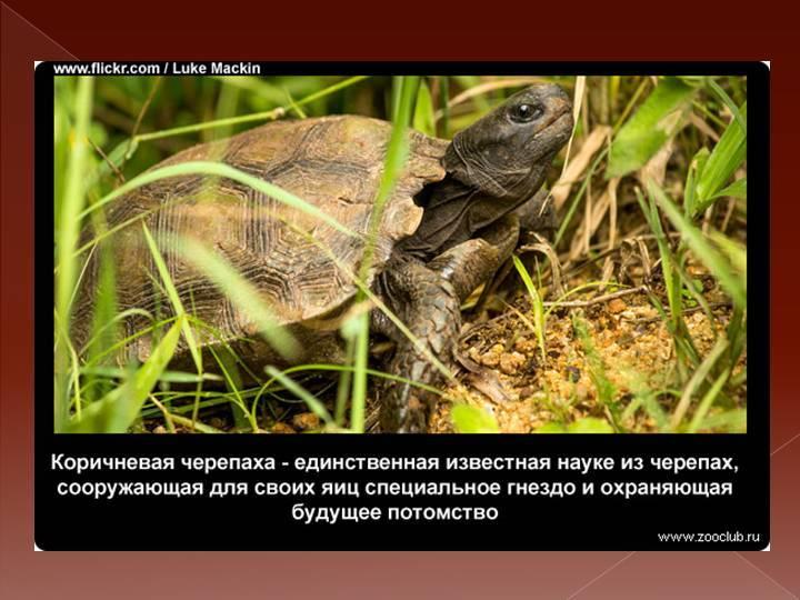 Все виды черепах. их разновидности и классификация1 min read. мифы, ошибки и заблуждения о черепахах как называется дом черепахи