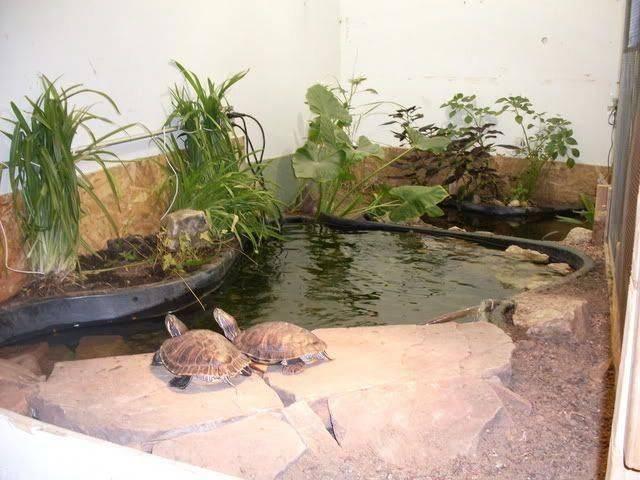 Делаем островок для красноухой черепахи