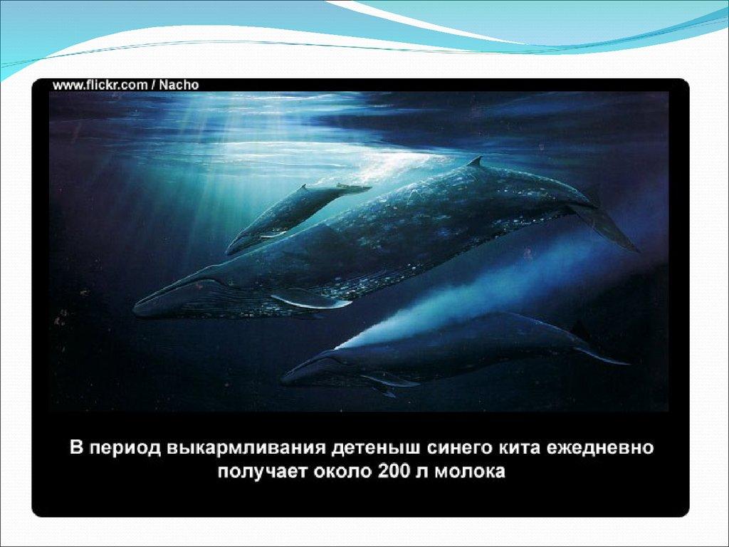 Клюворылы – что это за киты?
