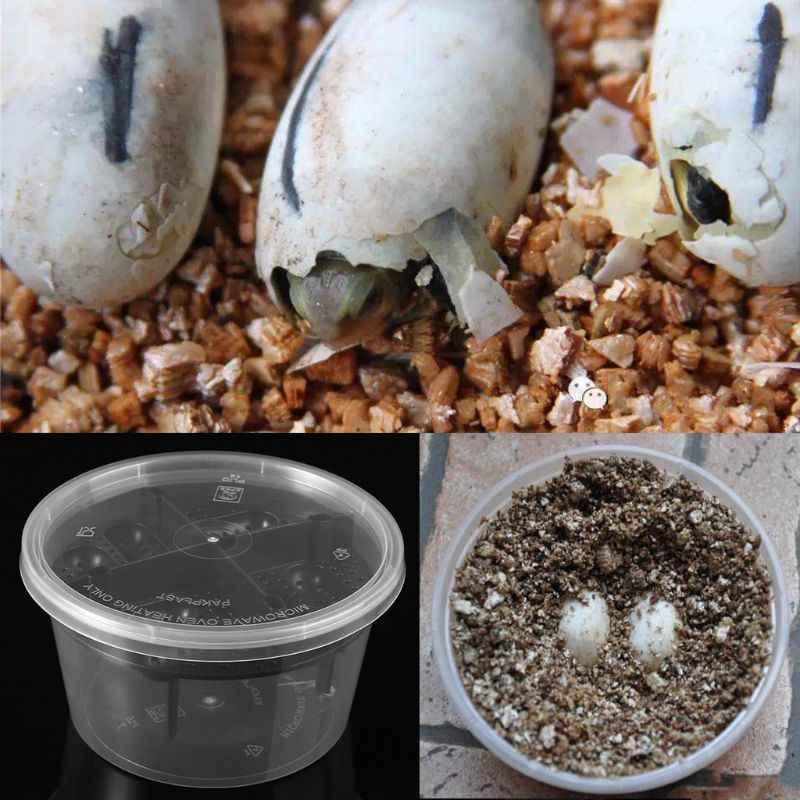 Яйцо инкубационный - egg incubation - qwe.wiki