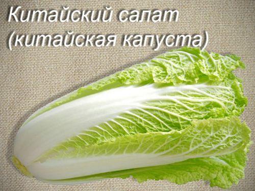 Давать ли хомяку капусту?
