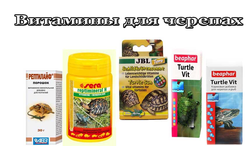 Как лечить черепаху — практические советы владельцам