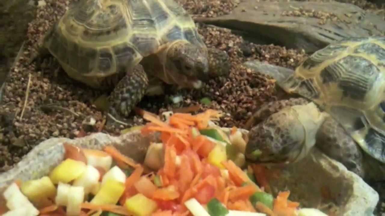 Чем нельзя кормить красноухую черепаху | что говорят насекомые