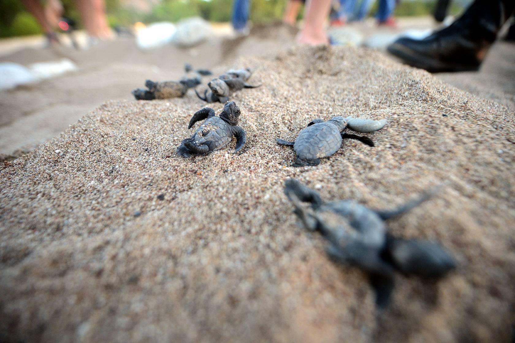 Все о черепашьем пляже в турции: описание, место на карте, почему так называется