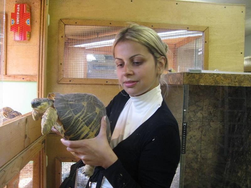 Лечение рептилий ветеринаром-герпетологом