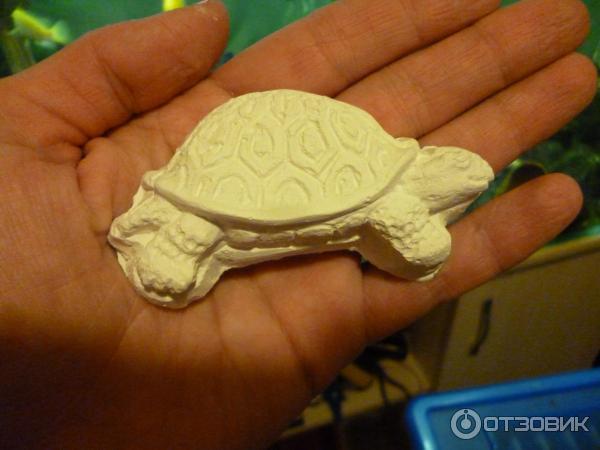 Чем кормить черепаху (виды корма)