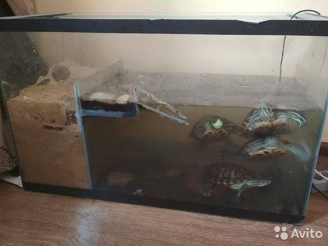 Как изготовить террариум и аквариум своими руками