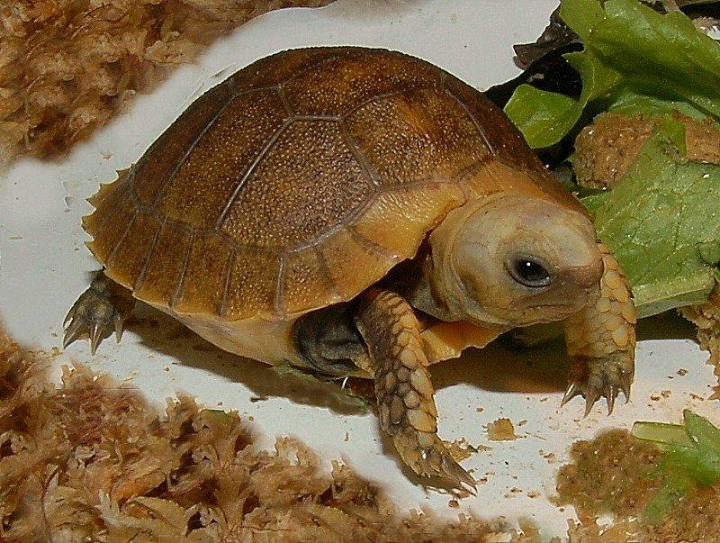 Чем питаются черепахи в природе и домашних условиях: это познавательно