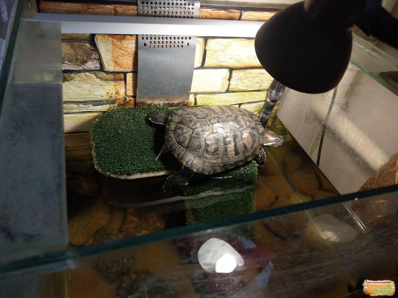 как перевезти красноухую черепаху на машине