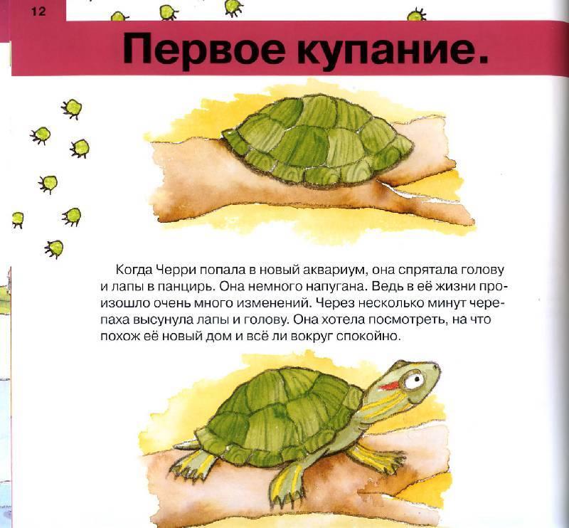 Как ухаживать за черепахой? как ухаживать за декоративными черепахами?