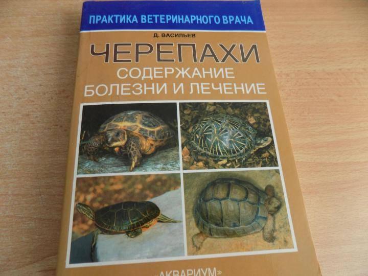 Чем кормить сухопутных черепах
