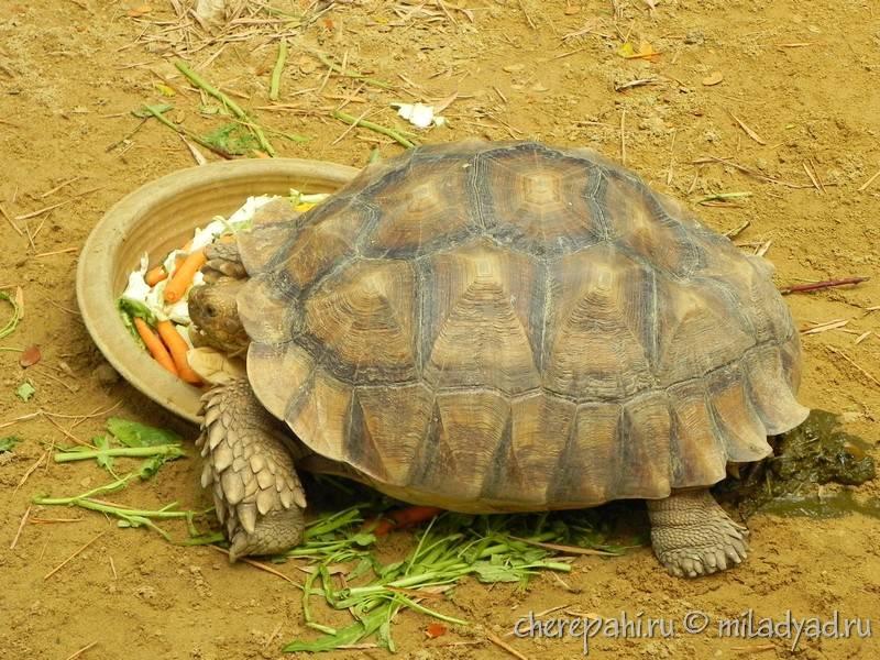 Etur.ru - можно ли вывозить черепах из туниса или какие действия необходимо предпринять для вывоза черепахи?