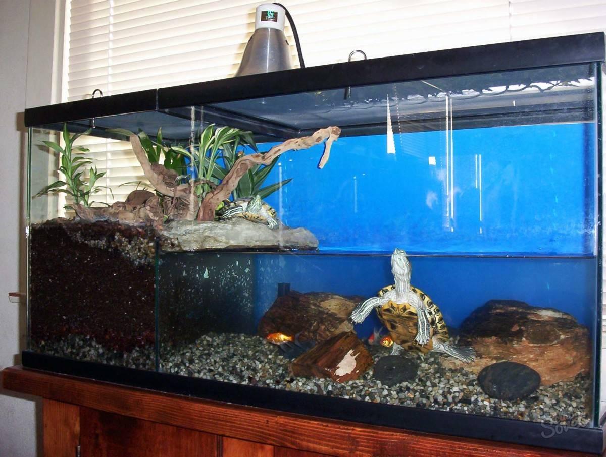 Сухопутная черепаха - основы содержания и ухода за домашней рептилией