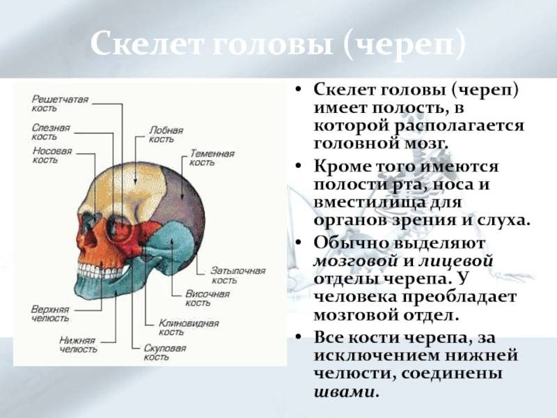 Органы слуха у черепах