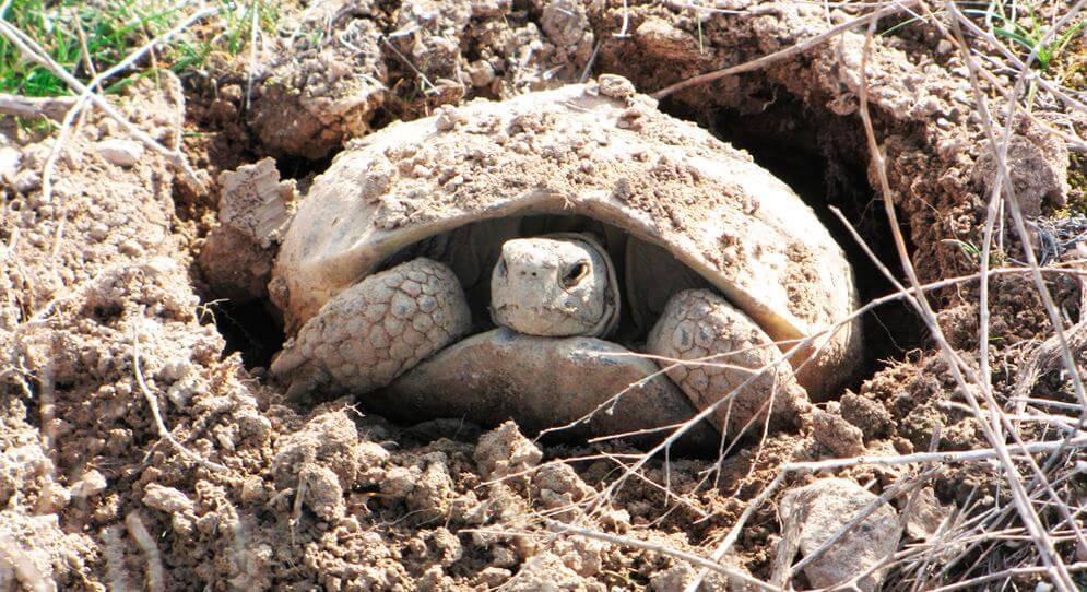 Сухопутная черепаха в домашних условиях - секреты ухода