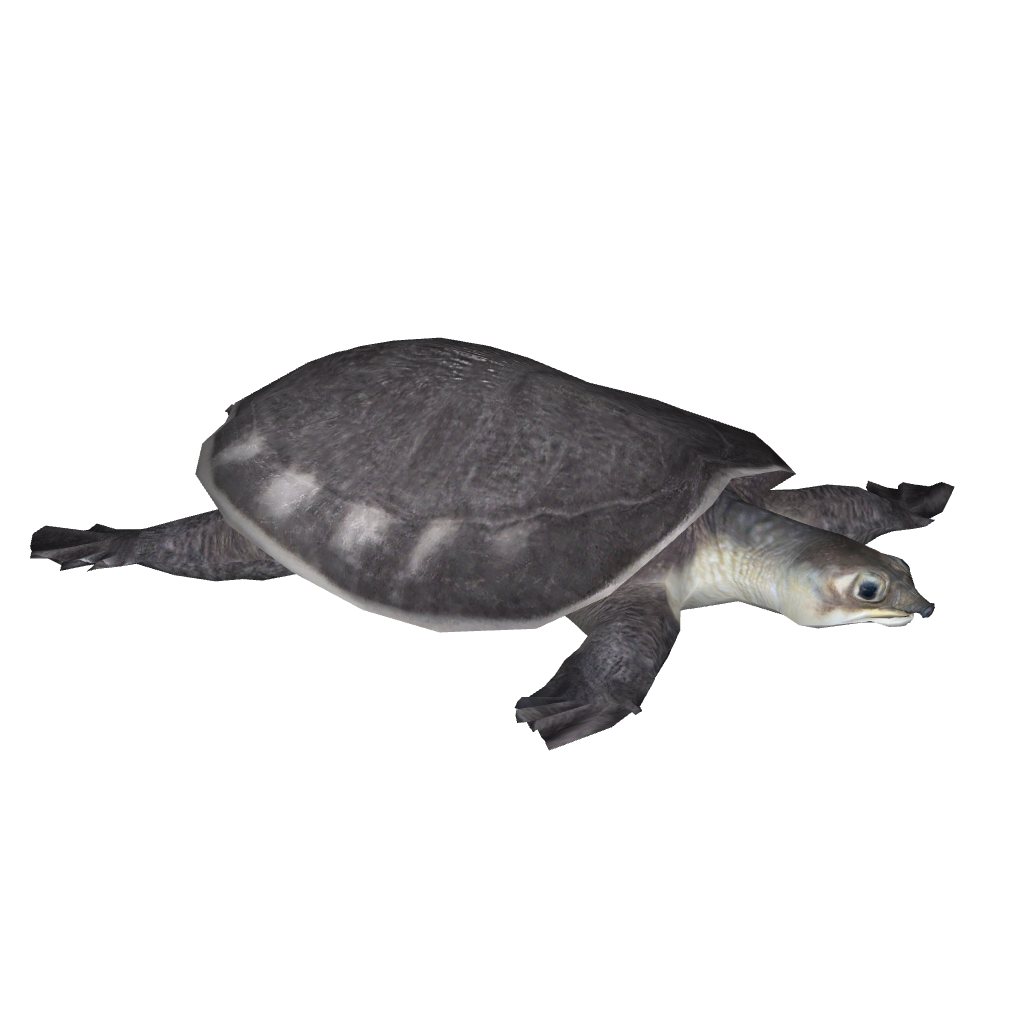 Двухкоготные черепахи - вики