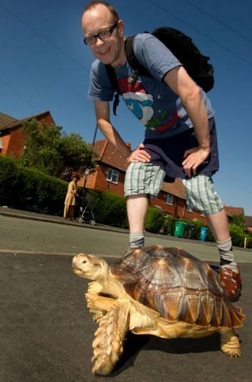 Как гулять с черепахой