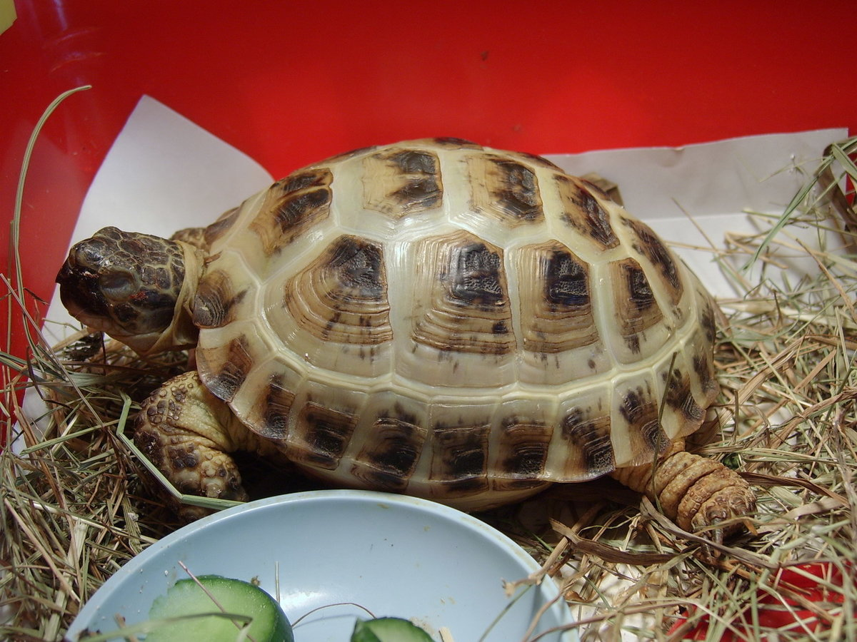 Виды и особенности сухопутных черепах