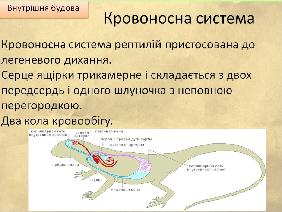 Современный ассортимент и механизмы действия инсектоакарицидов для мелких домашних животных текст научной статьи по специальности «ветеринарные науки»