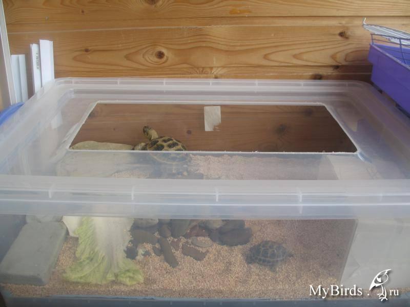 Как выбрать фильтр для аквариума с черепахами