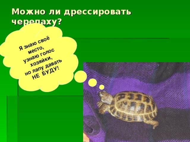Интересные загадки про черепах в стихах