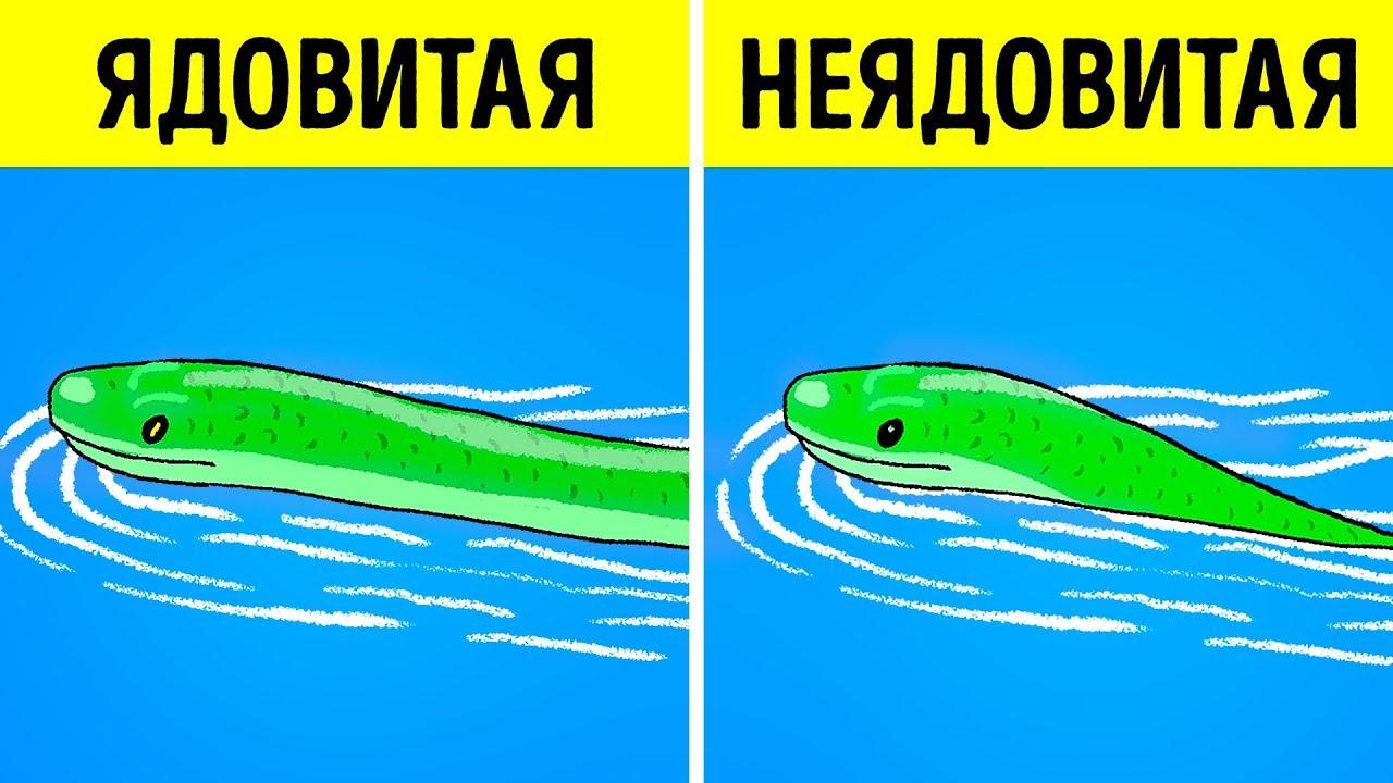 Как отличить ядовитую змею от неядовитой?