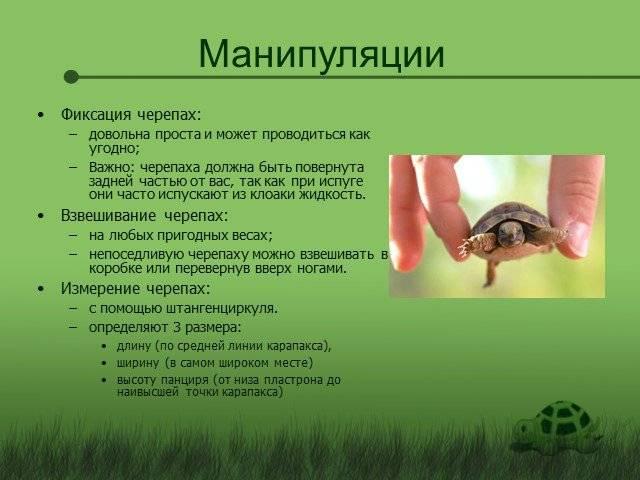 Этологические адаптации - адаптаций животных к факторам среды