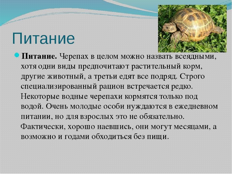 Черепаха в домашних условиях. мифы, ошибки и заблуждения о черепахах черепахи имеют длинные ноги