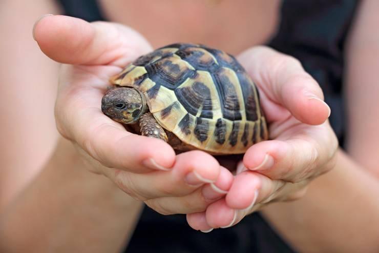 16 самых популярных видов домашних черепах