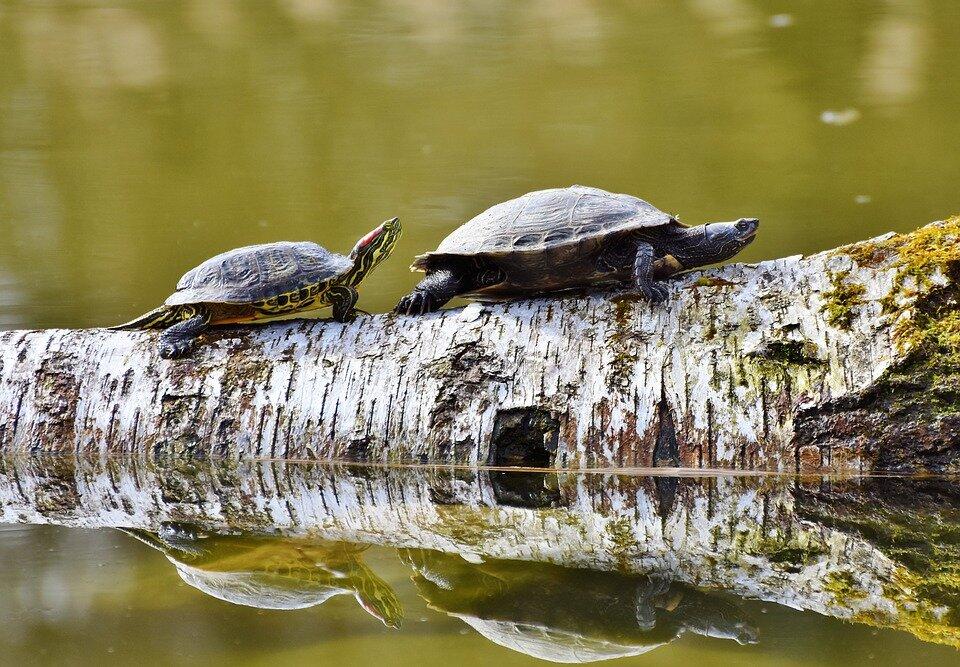 среда обитания черепах