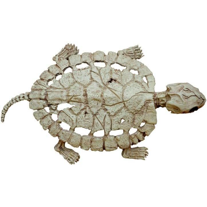 Панцирь черепах. строение панциря черепах
