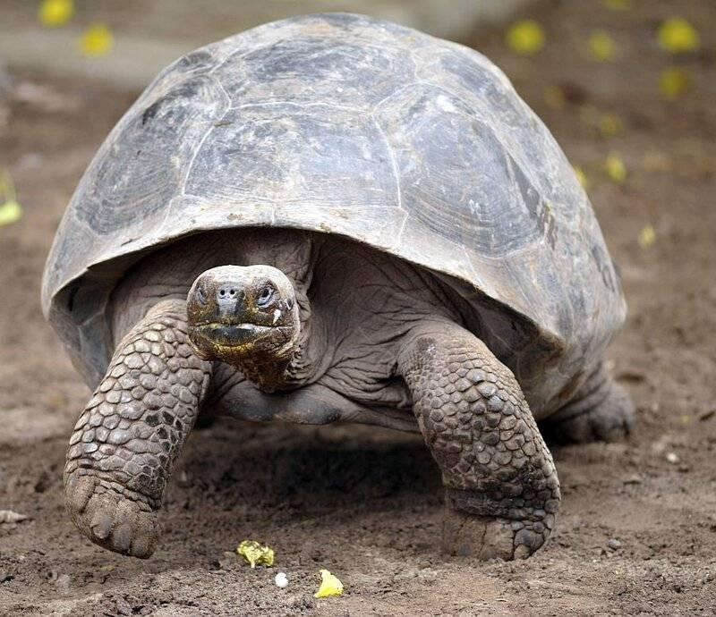 Долгожители среди животных: самые старые существа в мире