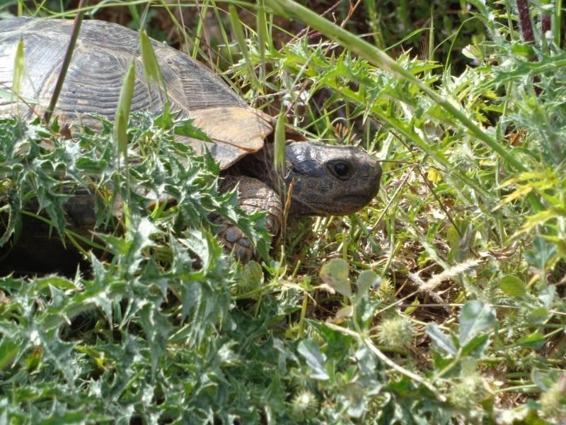 Где посмотреть на черепах в россии (южный и северо-кавказский фо)? - черепахи.ру - все о черепахах и для черепах