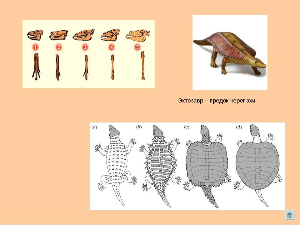 Интересные факты о черепахах