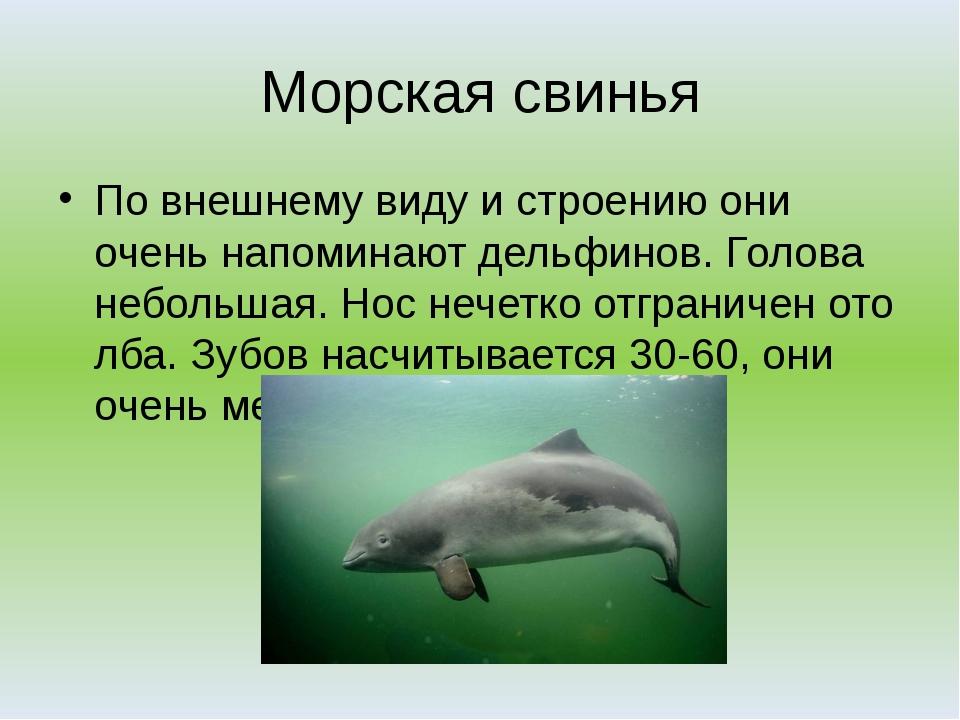 Морские свиньи