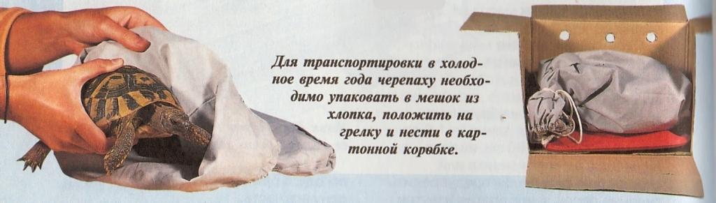 Krasnouhaya-cherepashka - запись пользователя какоенебоголубое (allamama) в сообществе домашние животные в категории помогите советом - babyblog.ru