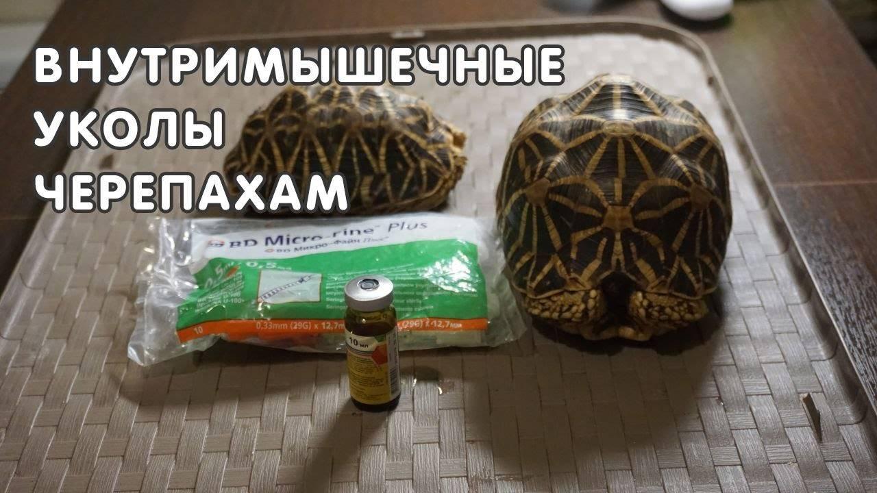 Калькулятор дозировок лекарств для черепах