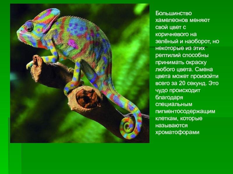 Почему хамелеоны меняют цвет?