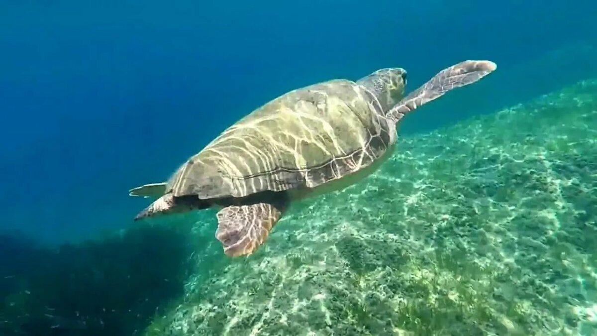 Увидеть красноухих черепахна крите, греция