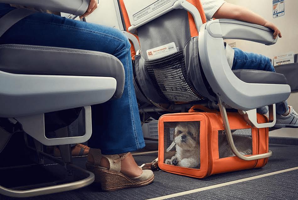 Как взять животное в самолет: шесть жизненно важных правил перелетов для собак и кошек - новости - 66.ru