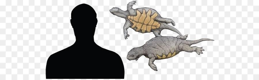Odontochelys -odontochelys